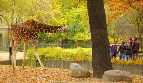 ke ve buoi di tham so thu cua em - Kể về buổi đi thăm sở thú của em
