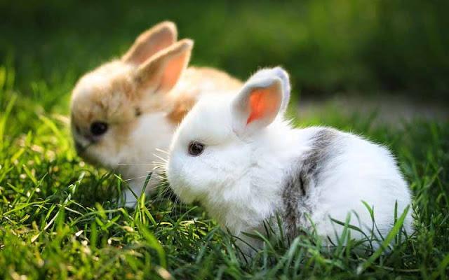 ta con tho - Tả con thỏ mà em biết