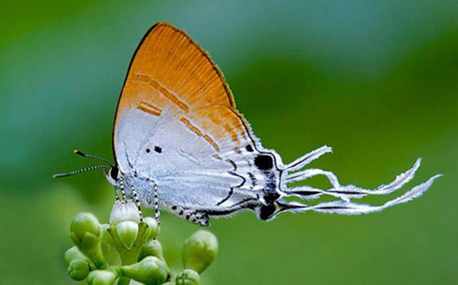 ta con buom buom ma em nhin thay - Tả con bươm bướm mà em nhìn thấy