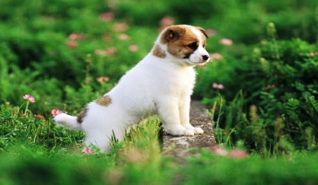 ta con cho cua nha em hoac nha hang xom - Tả con chó của nhà em hoặc nhà hàng xóm