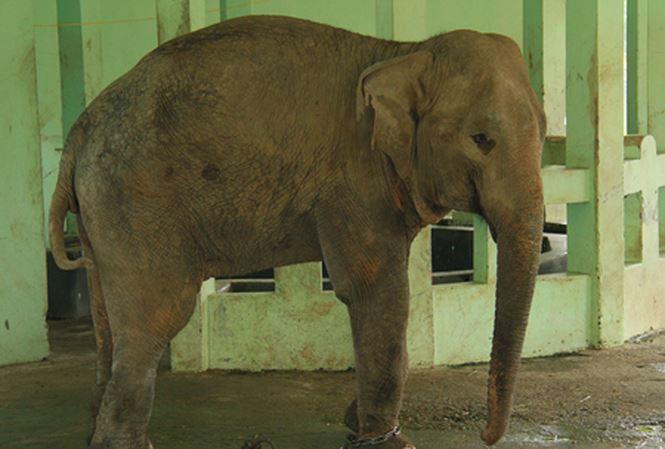 ta con voi trong so thu 1 - Tả con voi trong sở thú