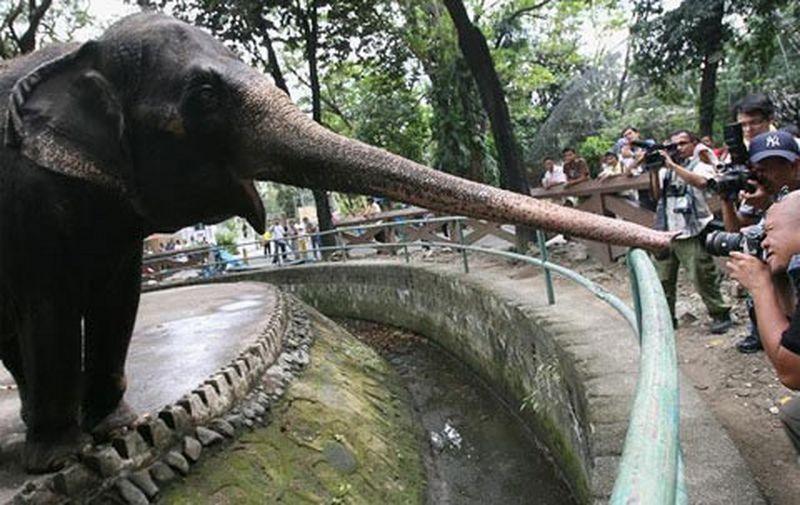 ta con voi trong so thu - Tả con voi trong sở thú