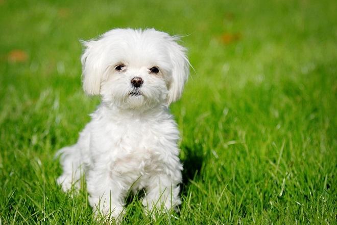 unnamed file 98 - Tả con chó lớp 4 hay nhất