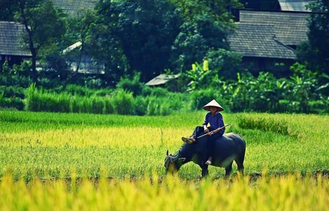 """que huong la chum khe ngot - Bài thơ """"Quê hương"""" là một bức tranh mang vẻ đẹp tươi sáng, giàu sức sống của một làng quê."""