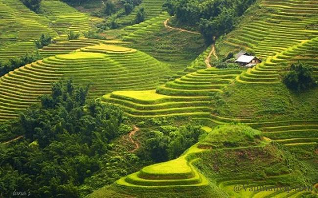 phan tich bai tho viet bac - [Văn mẫu học sinh giỏi] Phân tích bài thơ Việt Bắc của Tố Hữu
