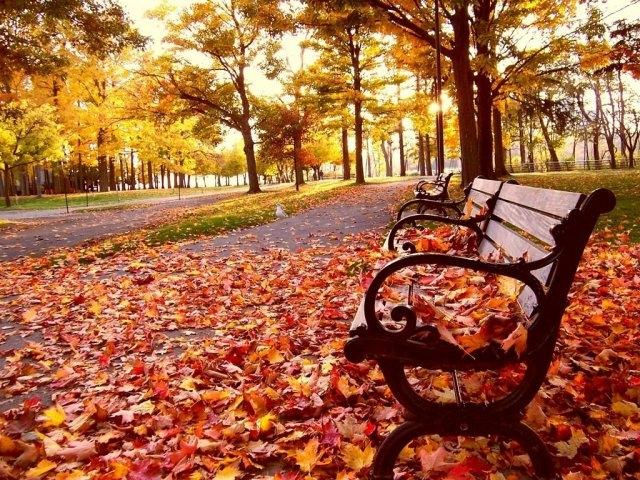 van mau hoc sinh gioi phan tich bai tho cam xuc mua thu cua do phu - [Văn mẫu học sinh giỏi] Phân tích bài thơ Cảm xúc mùa thu của Đỗ Phủ